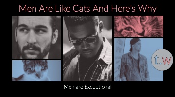 Men Are Like Cats Blog Post